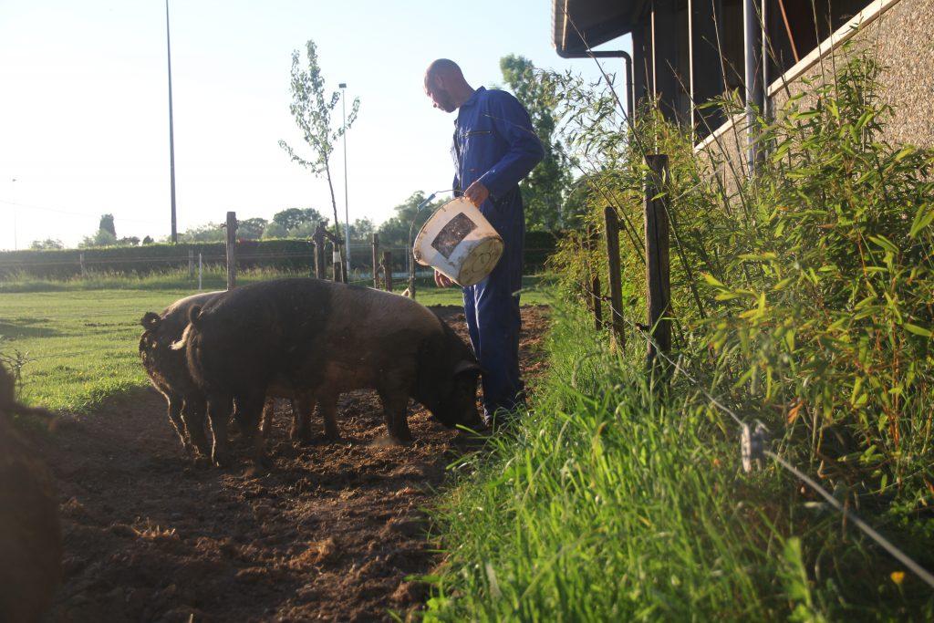 Diervriendelijk boeren | De Dykhoeve - Herwen